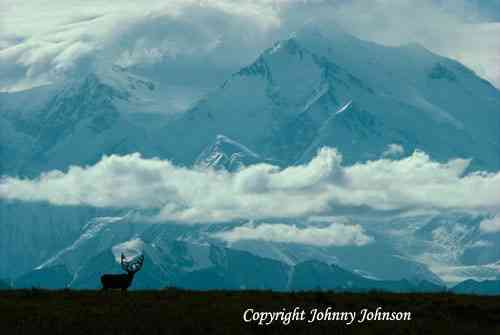 """SPIRIT OF DENALI"""